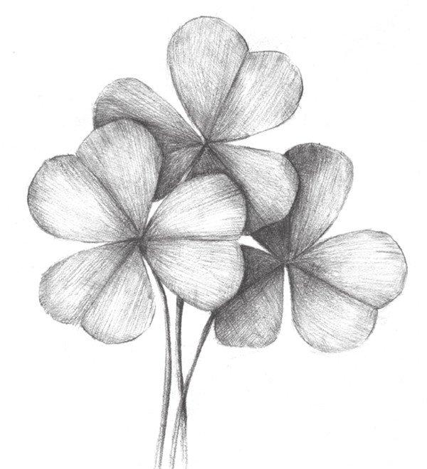 北京画室_素描三叶草的绘画教程