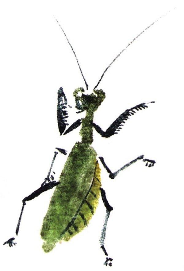国画螳螂的绘画步骤(2)
