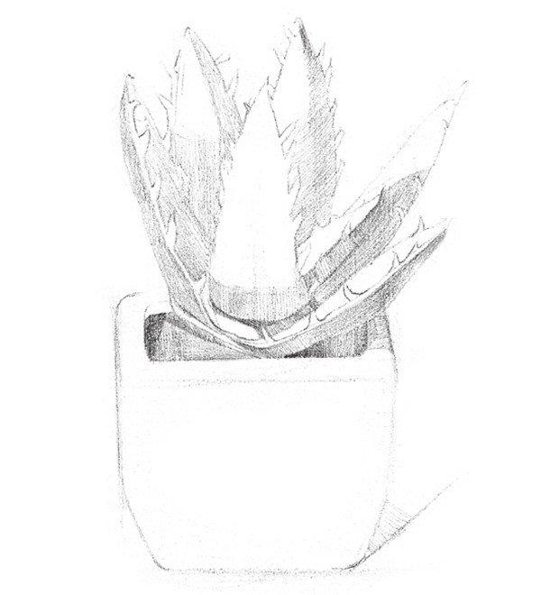 手绘漫画学习  插画教程  素描芦荟的绘制要点  因为芦荟的花盆是
