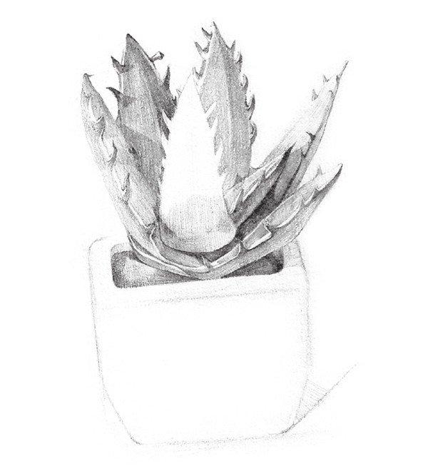 6,整体调整,画出芦荟花盆的明暗关系,这样芦荟盆栽就画完了.