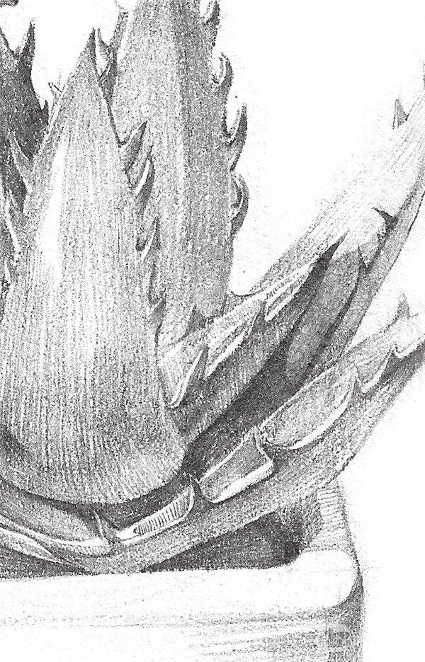 3d立体画  手绘漫画学习  插画教程  素描芦荟的绘制要点  因为芦荟