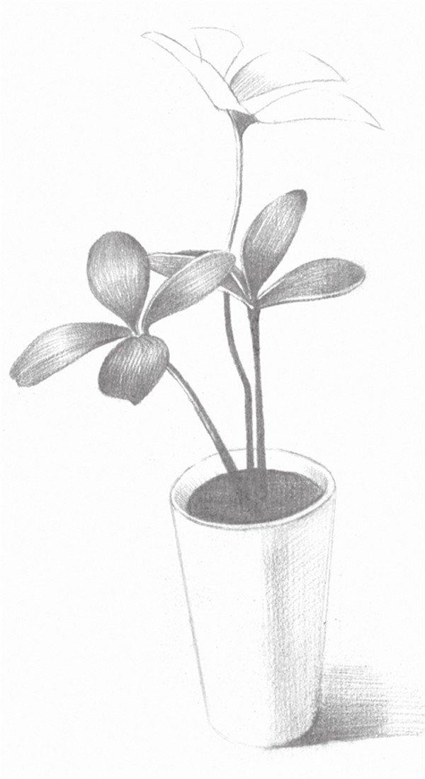 素描四叶草的的绘画步骤四