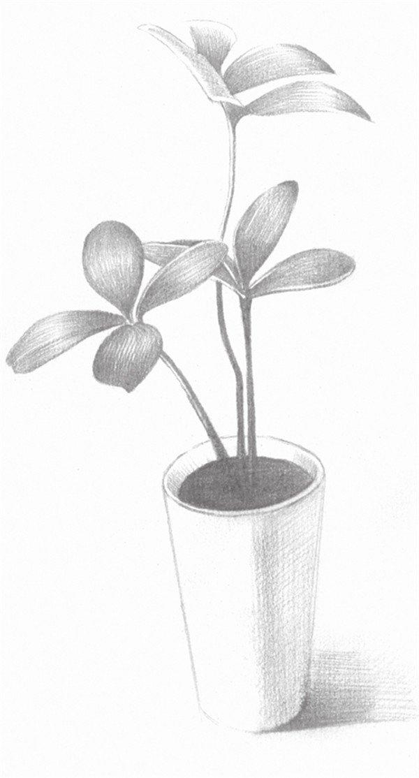 素描四叶草的的绘画步骤五