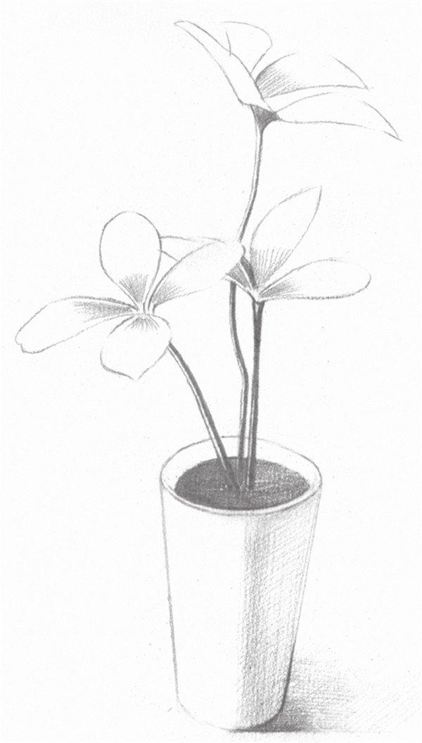 素描四叶草的的绘画步骤二