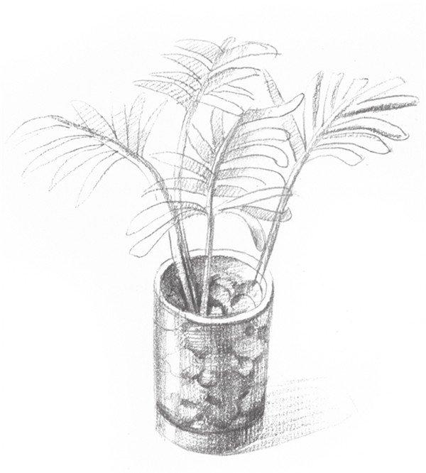 素描椰子树的绘画步骤五