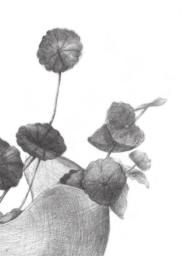 绘制要点 注意铜钱草叶子的前后遮挡关系,颜色轻重分明会更有层次感.图片