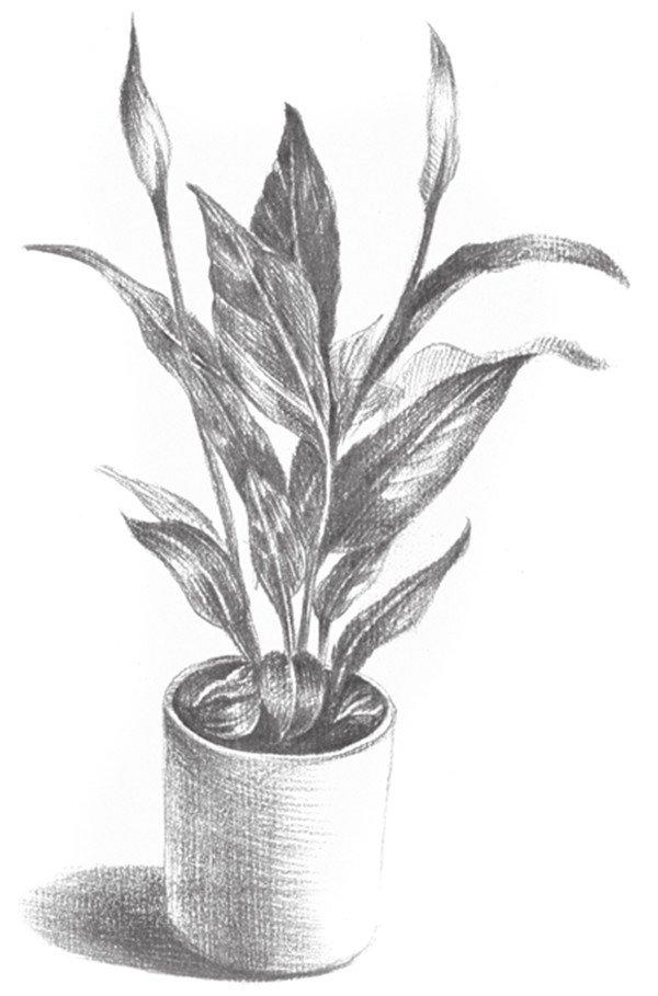 素描植物初学者