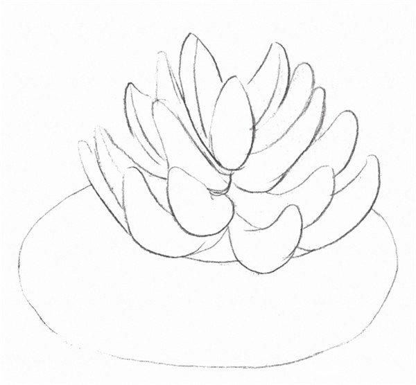 素描多肉植物的绘画技法(2)