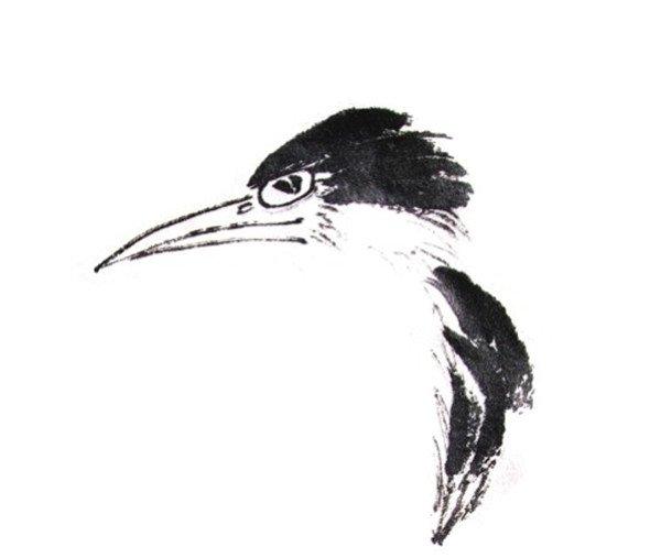 水墨翠鸟的绘画教程 2