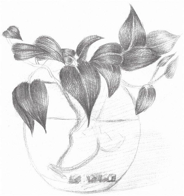 6、继续深入叶子的固有色,注意叶子的层次关系,注意前后虚实的变化。  素描水培绿萝的绘画步骤六 7、继续刻画绿萝的花盆,注意玻璃质感的表现,预留出玻璃的高光部分。  素描水培绿萝的绘画步骤七 8、继续刻画出绿萝的根部,注意在水中的植物表现,再用橡皮擦出玻璃花盆的质感,这样绿萝就画完了。  素描水培绿萝的绘画步骤八