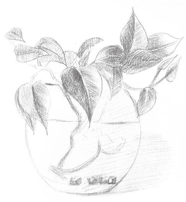 一、水培素描绿萝的技巧手动绘画换档步骤图片