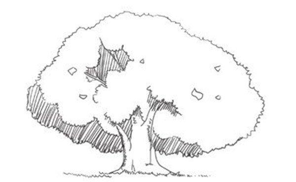 速写树的立体感绘画技法(4)