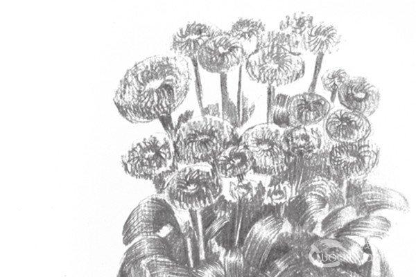 菊花,别名寿客、金英、黄华、秋菊、陶菊等,是菊目菊科多年生草本植物的一个属。在中国古典文学中及文化中,梅、兰、竹、菊合称四君子。菊花是中国十大名花之一,在中国有三千多年的栽培历史,中国菊花传入欧洲,约在明末清初。中国人极爱菊花,从宋朝起民间就有一年一度的菊花盛会。古神话传说中菊花又被赋予了吉祥、长寿的含义。分享白描菊花的