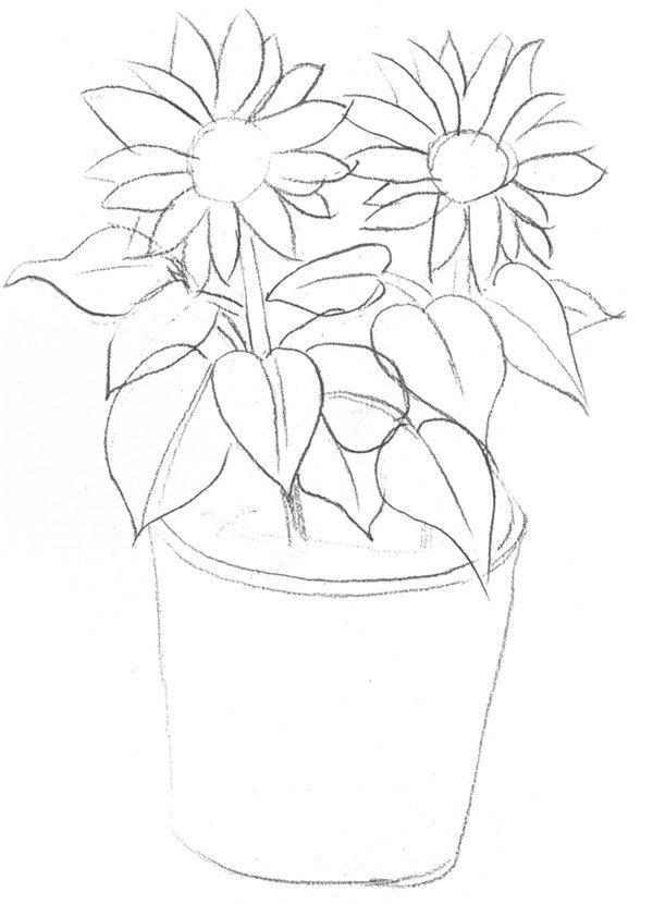 素描太阳花的绘画步骤二-素描太阳花的绘画技法图片