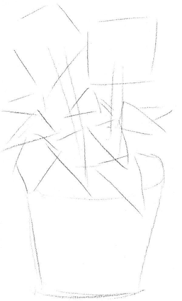 素描太阳花的绘画步骤一