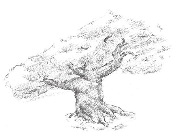 素描松树的绘画步骤四