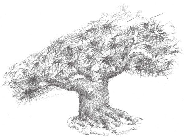 4、加重松树的树干颜色,注意树干的纹理表现,这部分的松树就初步成型了。 素描松树的绘画步骤四 5、用坚硬的 铅笔画 出松树的松枝,整体调整,这样松树就画完了。 素描松树的绘画步骤五 二、素描松树的绘制要点 画
