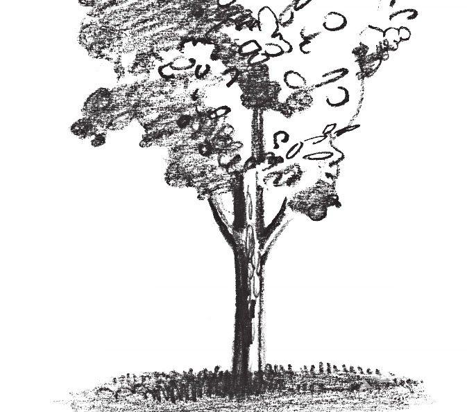 素描杨树的绘画技法 5图片