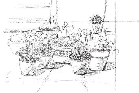 速写盆栽组合绘画技法