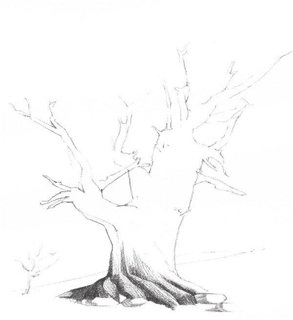 素描枯树的绘画步骤二