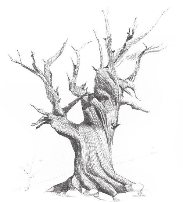 素描枯树的绘画教程(3)_素描教程_学画画_我爱画画网