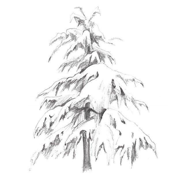 素描雪松的绘画教程(4)