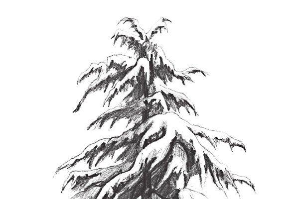 素描雪松的绘画教程