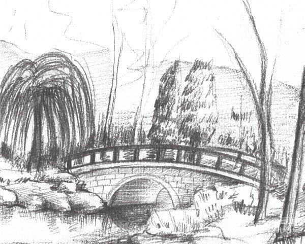 素描植物园的绘画步骤七-素描植物园的绘画技法 4图片
