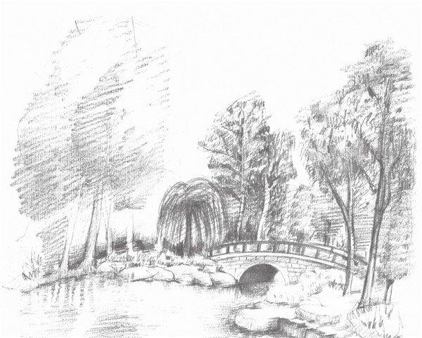 素描植物园的绘画步骤十一