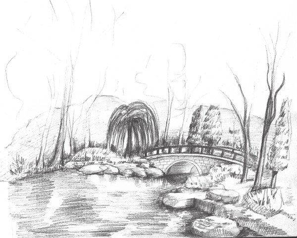 素描植物园的绘画步骤九