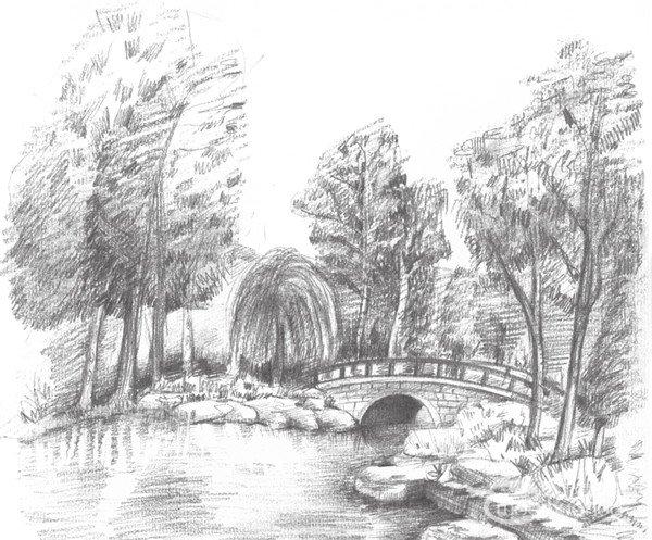 学画画 素描教程 素描风景 > 素描植物园的绘画技法      植物园里有