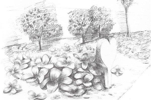 素描菜地种植的绘画技法