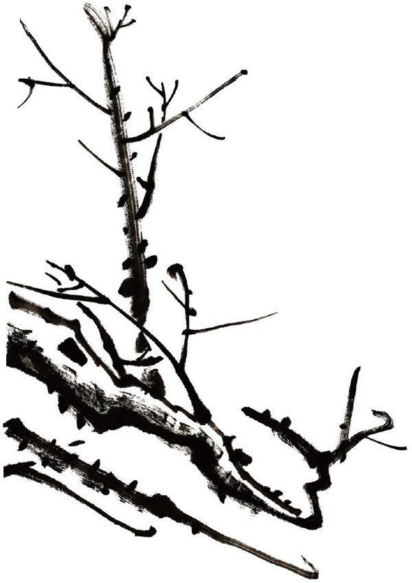 画梅花的老干一般选用较大的狼毫笔,蘸墨前先将毛笔洗净,使毛笔内保持适当的水分,然后在笔的一侧蘸墨。下笔时要利用笔的捻、转、折、顺的交错变化及笔锋的散、聚、侧、逆,使画出的梅干有浓、淡、干、湿的变化。  水墨梅花枝干 水墨梅花画老干时还要注意老干转折处各部分的长短变化,注意节奏感。