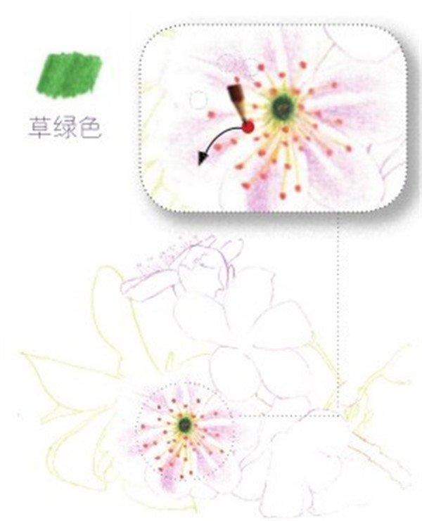 樱花铅笔画法步骤
