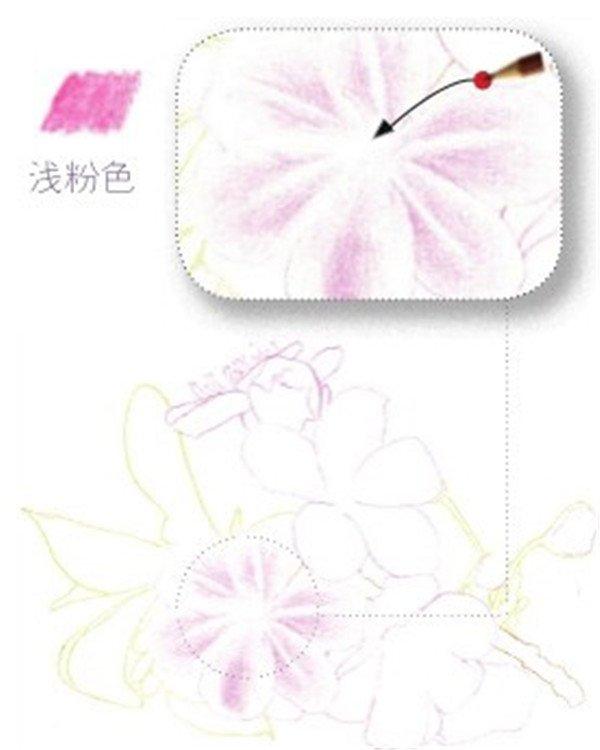 彩铅画樱花绘画技法 3
