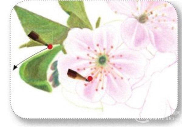 彩铅画樱花绘画技法 6