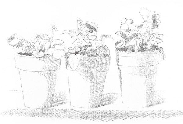 素描院内盆栽的绘画步骤四