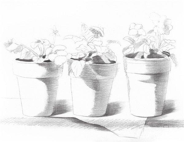 素描院内盆栽的绘画步骤五