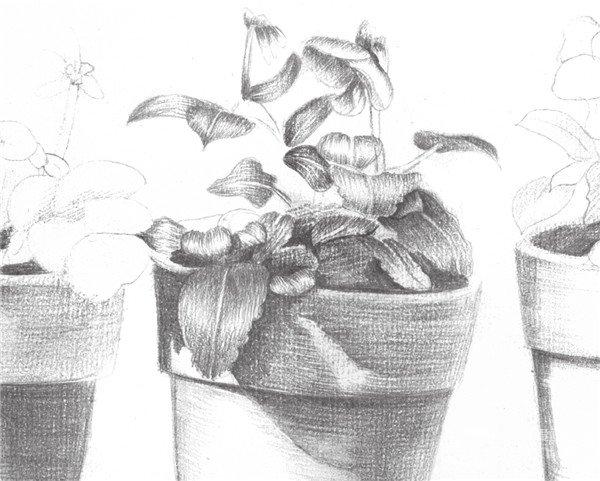 素描院内盆栽的绘画步骤七