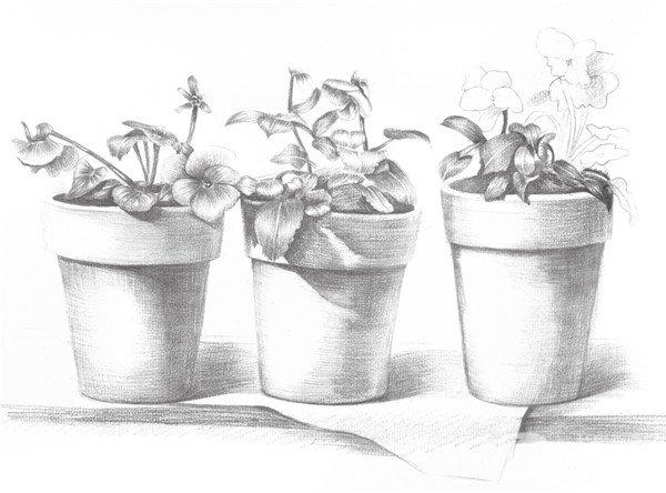 学画画 素描教程 素描风景 > 素描盆栽的绘画教程(4)      7,继续完善