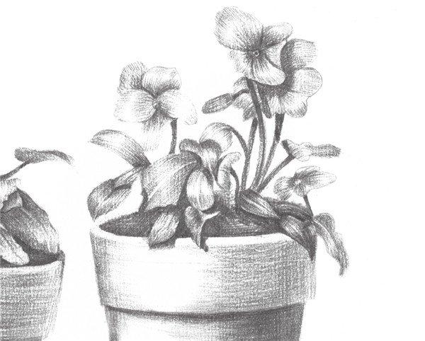 素描院内盆栽的绘画步骤十