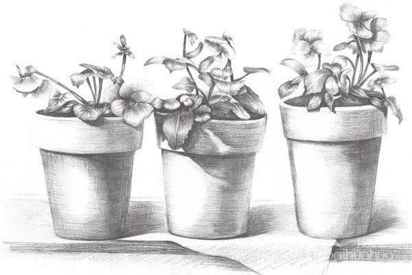 素描盆栽的绘画教程