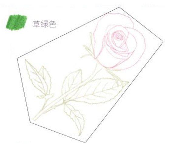 1、玫瑰线稿的绘制 (1)用红色的铅笔在纸上绘制出玫瑰花朵的大致形状。  玫瑰线稿的绘制一 (2)用草绿色的铅笔勾画出玫瑰花的叶子和茎,注意观察其生长关系。  玫瑰线稿的绘制二 (3)用草绿色的铅笔绘制玫瑰花茎上的叶子时,叶子的边缘不用画太直,带些曲线会让叶子看起来更具动感。 玫瑰线稿的绘制三