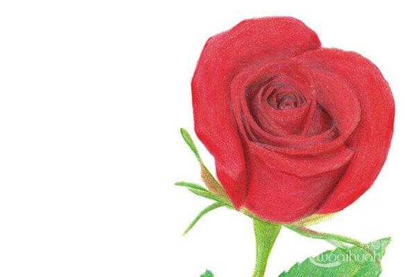 色彩画玫瑰的绘画技法