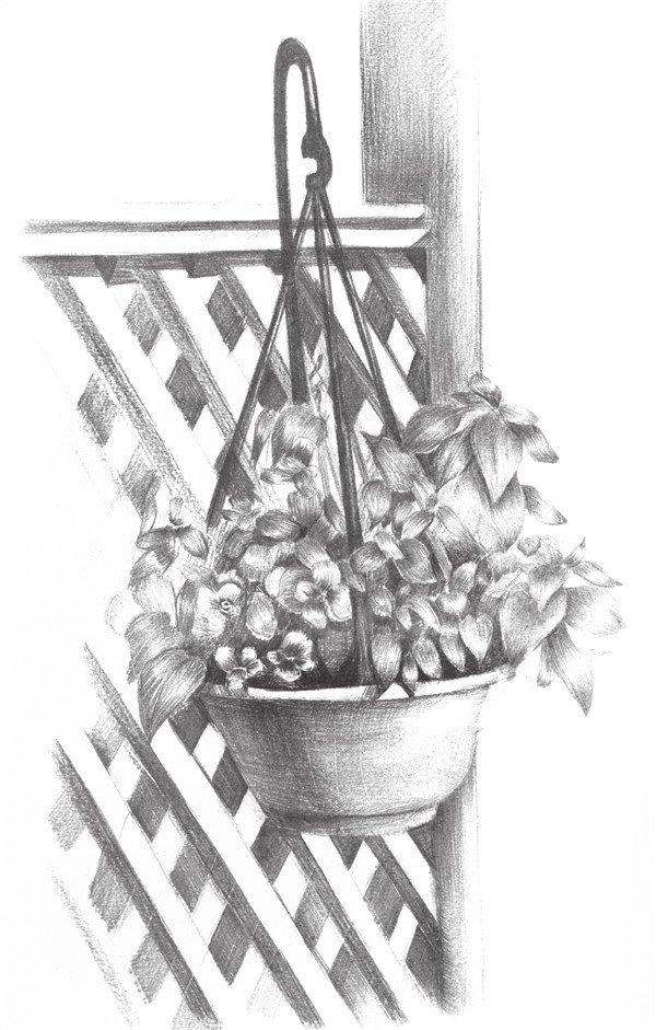 素描栅栏花藤的绘画步骤十一-素描栅栏花藤的绘画教程 5图片