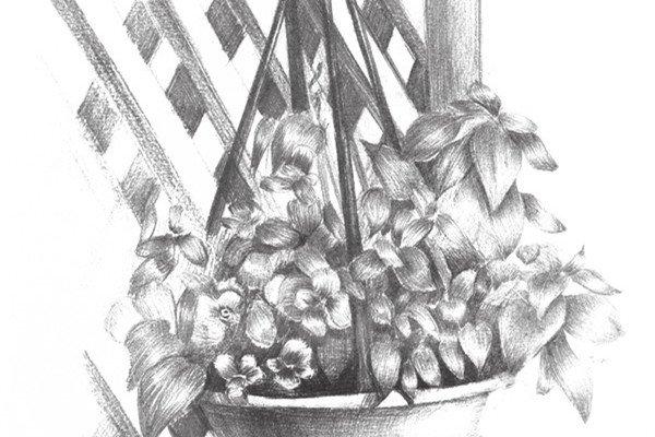 素描栅栏花藤的绘画教程