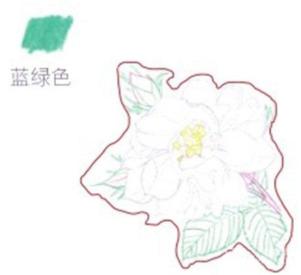 彩铅月季的绘画步骤(2)