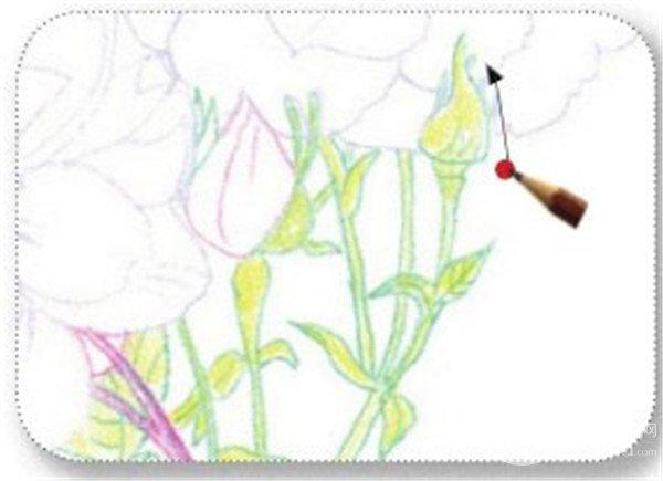 3、 绘制月季的叶和茎 (1) 用柠檬黄色的铅笔涂抹月季的花茎和花萼。  绘制月季的叶和茎一 (2) 拿起橄榄绿色的铅笔涂抹一遍花萼与花茎。  绘制月季的叶和茎二 (3) 用赭石色的铅笔画出花萼与花茎的最深处。  绘制月季的叶和茎三