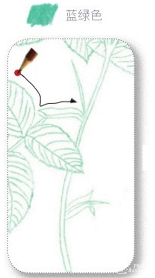 彩铅月季的绘画步骤(11)