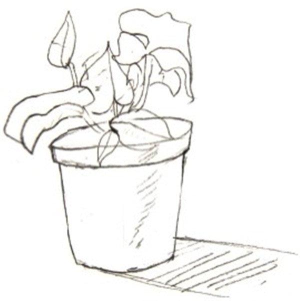 盆栽单色的绘画步骤一